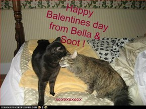 Happy Balentines day from Bella & Soot !