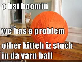 o hai hoomin we has a problem other kitteh iz stuck in da yarn ball