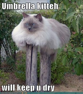 Umbrella kitteh  will keep u dry