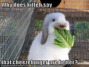Why does kitteh say  that cheezeburger are better?
