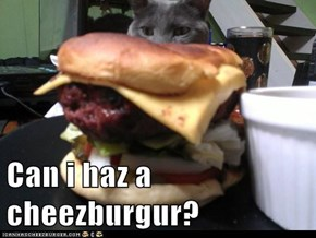 Can i haz a cheezburgur?