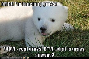 OMG!! I'm touching grass!  WOW - real grass! BTW, what is grass, anyway?