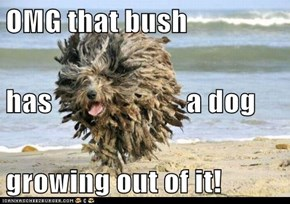 OMG that bush has                       a dog growing out of it!