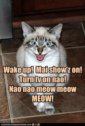 Meow meens nao!