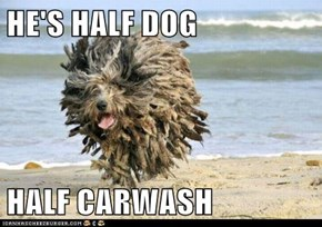 HE'S HALF DOG  HALF CARWASH