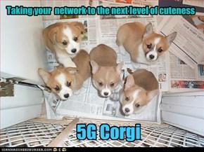5G Corgi