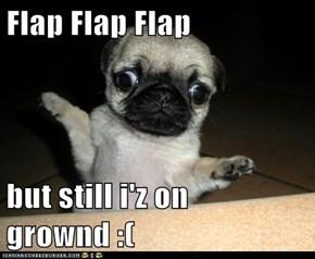 I Has a Hotdog: Flap Flap Flap