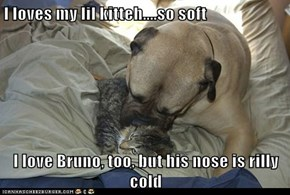 I loves my lil kitteh....so soft  I love Bruno, too, but his nose is rilly cold