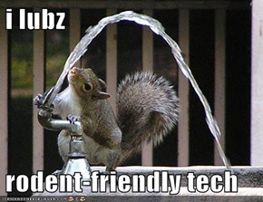 Squirrel, You're a Smart One!