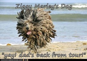 "Ziggy Marley's Dog  ""yay! dad's back from tour!"""