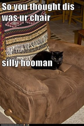 So you thought dis was ur chair silly hooman