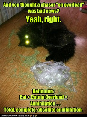 A Trekkie's Guide to Cat Ownership, Chapter 3 - Amusing Pastimes