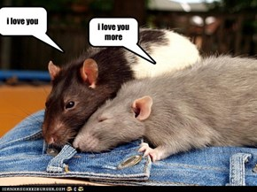 now just lisin to me RATS ARE CUTE