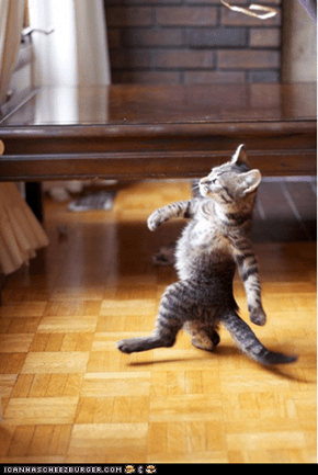 Cyoot Kitteh of teh Day: Haters Gonna Hate