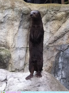 Daily Squee: Otterly Cute