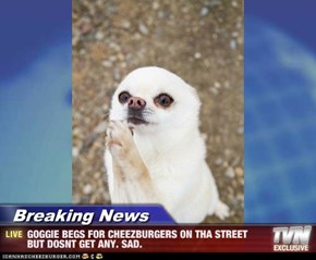 Breaking News - GOGGIE BEGS FOR CHEEZBURGERS ON THA STREET BUT DOSNT GET ANY. SAD.