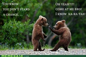 Come at me Bear