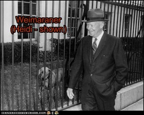 Pets of the US Presidents - Dwight D. Eisenhower