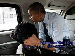 Pets of the US Presidents - Barack Obama