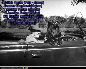 Pets of the US Presidents - Franklin D. Roosevelt