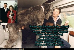 Pets of the US Presidents - Ronald Reagan