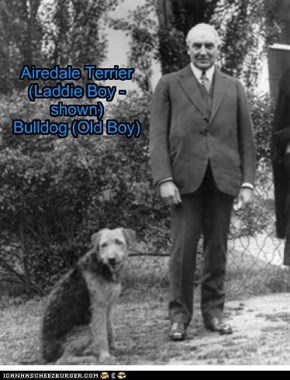 Pets of the US Presidents - Warren G. Harding