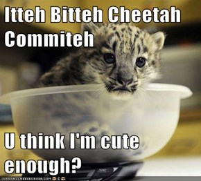 Itteh Bitteh Cheetah Commiteh  U think I'm cute enough?