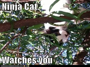 Ninja Cat.  Watches you
