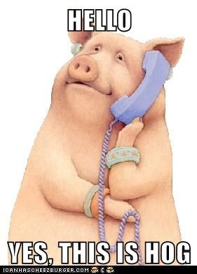 HELLO  YES, THIS IS HOG