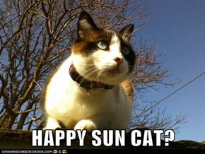 HAPPY SUN CAT?
