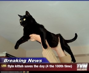 Breaking News - flyin kitteh saves the day (4 the 100th time)