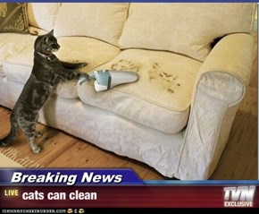 Breaking News - cats can clean