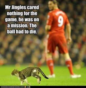 Mr Jingles cared nothing