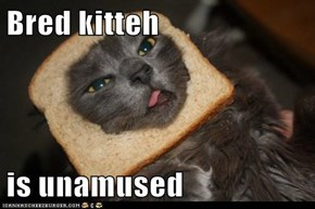 Bred kitteh  is unamused