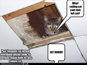 Why?  ceiling cat cant visit loft cat?