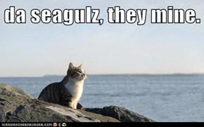 da seagulz, they mine.