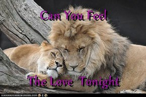 Can You Feel  The Love  Tonight