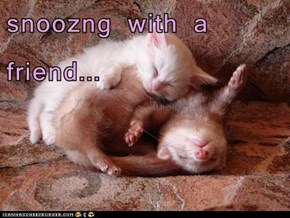 snoozng with a friend...