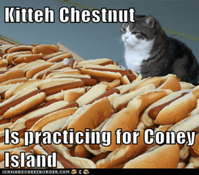 Kitteh Chestnut  Is practicing for Coney Island