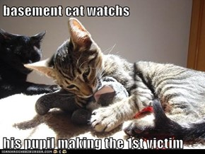 basement cat watchs  his pupil making the 1st victim
