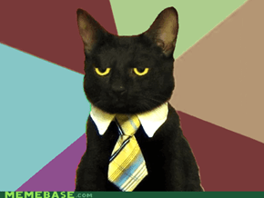 Business Cat Without Coffee
