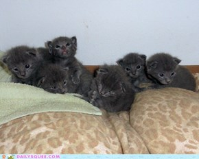 Reader Squees: Amber and Angelo's Six Kittens