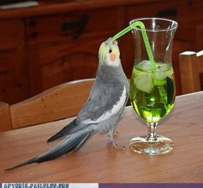 Crunk Critters: One Appletini, Easy On The Tini