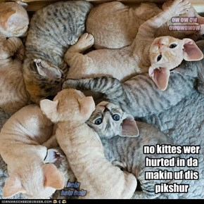 no kittes wer hurted in da makin uf dis pikshur