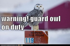 warning! guard owl on duty