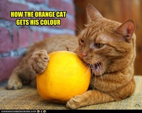 HOW THE ORANGE CAT GETS HIS COLOUR