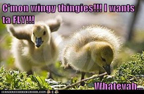 C'mon wingy thingies!!! I wants ta FLY!!!  Whatevah...