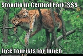 Stoodio in Central Park-$$$  free tourists for lunch
