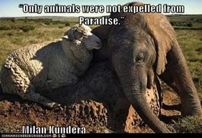 """Only animals were not expelled from Paradise.""          - Milan Kundera"