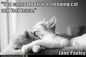 """You cannot look at a sleeping cat and feel tense.""   - Jane Pauley"